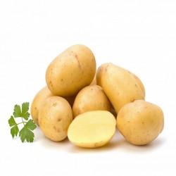 Pomme de terre(Marché de sake)