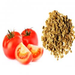 Semences des tomates